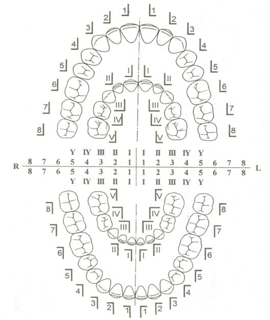 http://www.dental-revue.ru/Reference/Images/Form/form1.JPG