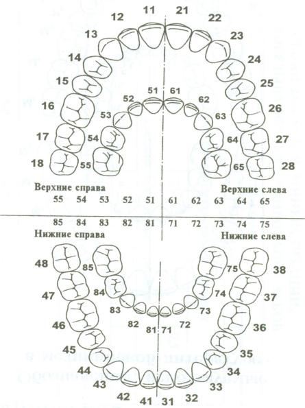 http://www.dental-revue.ru/Reference/Images/Form/form4.JPG