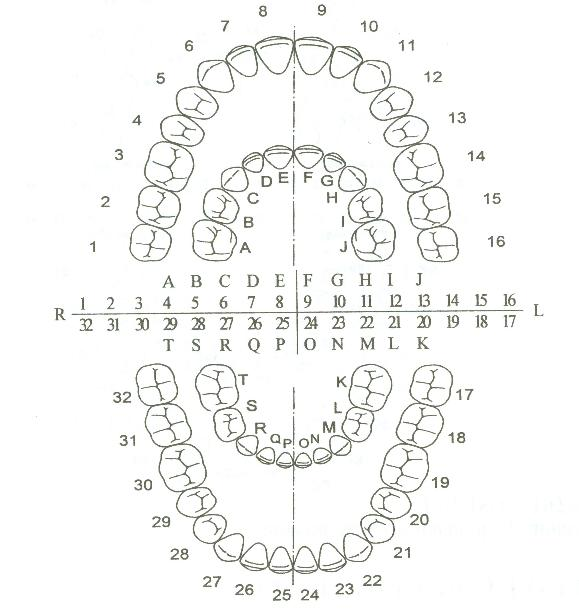 http://www.dental-revue.ru/Reference/Images/Form/form5.JPG
