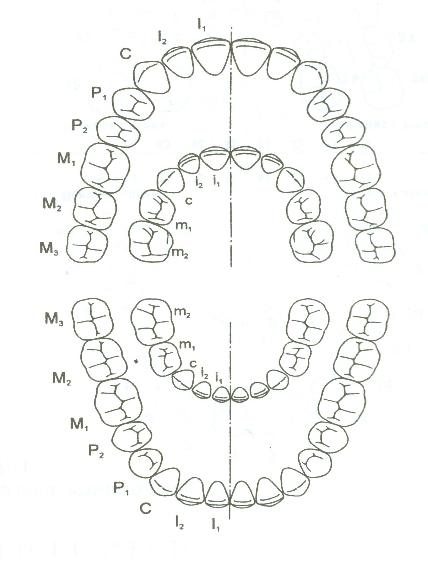http://www.dental-revue.ru/Reference/Images/Form/form6.JPG