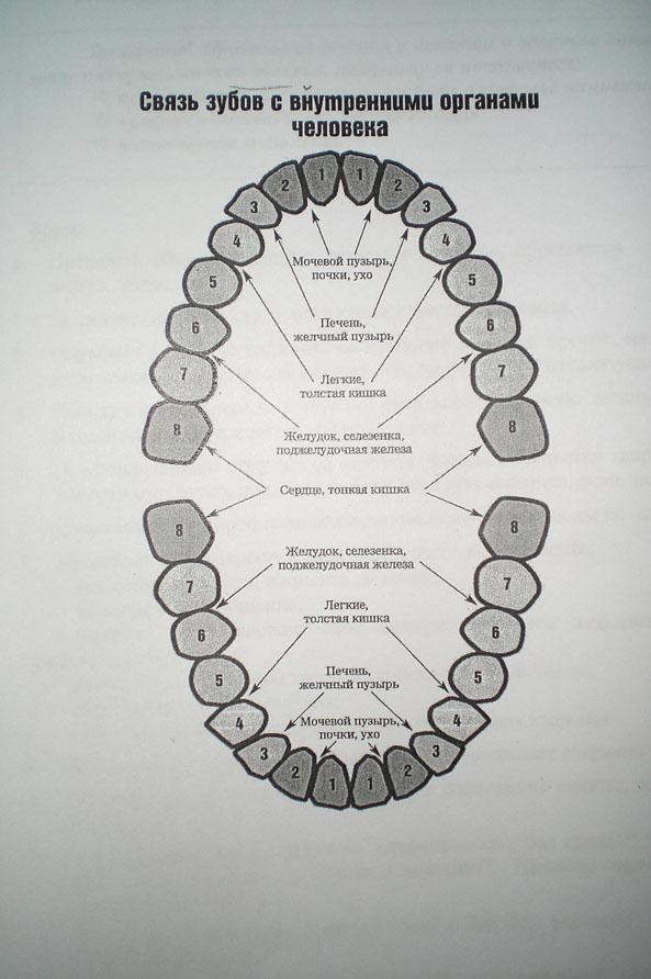 Схема связи зубов с органами